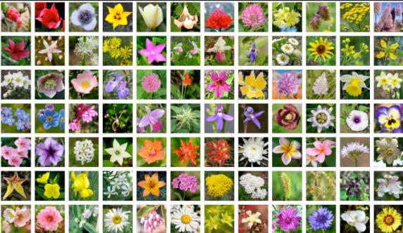 flores-de-bach.png